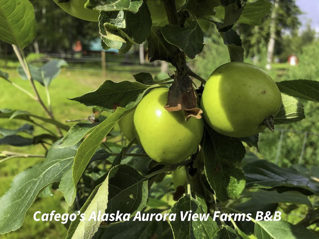 BnB_fruit